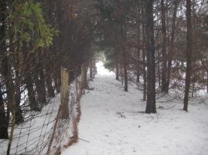 trailin bush